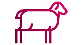 Talk to our Sheep Farm Insurance experts today