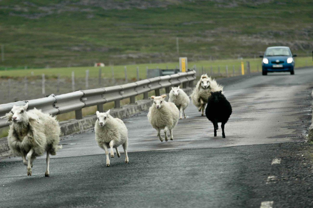 Does farm insurance cover public liability?