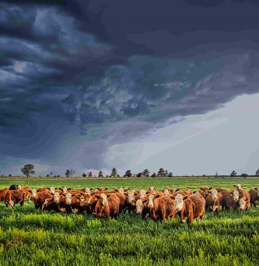 Does farm insurance cover storm damage?