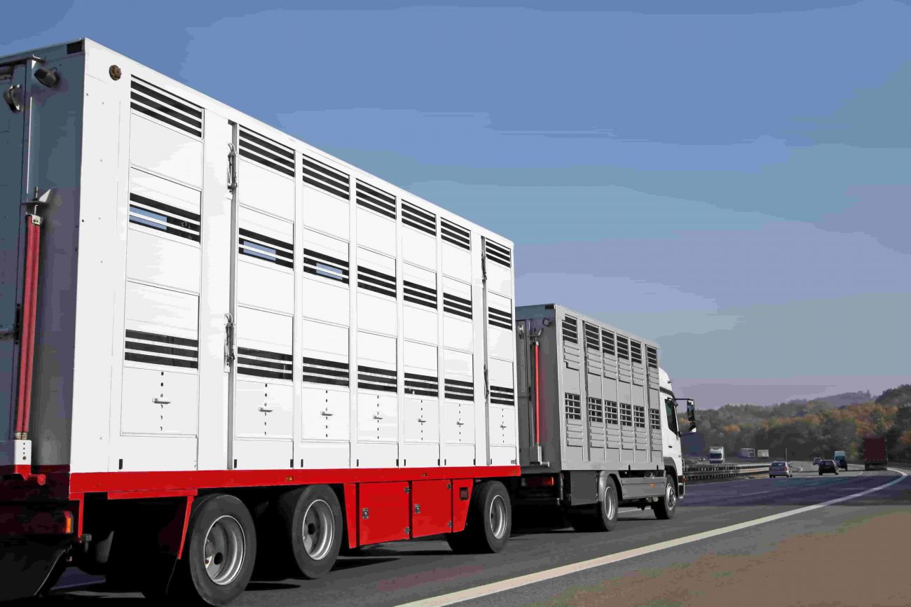 Farm Insurance Livestock in Transit