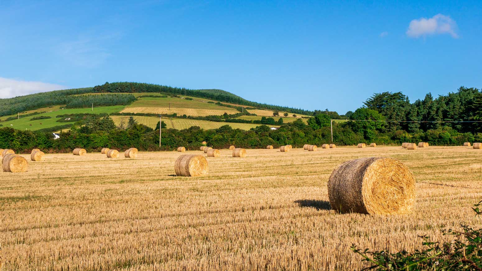 We offer farm insurance for a range of categories – from Dairy to Tillage as well as Agri-contractors
